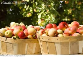 Image of Apples , full Bushel