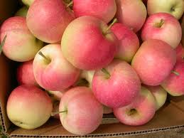 Image of Gala Apples