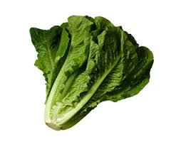 Image of Romaine Lettuce